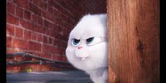 Cute Bunny Cartoon, Cute Cartoon Pictures, Cartoon Profile Pics, Cute Disney Wallpaper, Cute Cartoon Wallpapers, Snowball Rabbit, Rabbit Wallpaper, Cute Love Gif, Cute Baby Cats