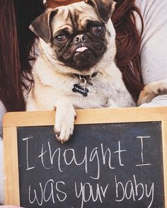 Pin for Later: Pets Upstage Their Humans' Big News in These Adorable Pregnancy Announcements
