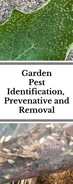 Learn about 5 common backyard garden pests and how to identify, prevent and remove them, when needed.