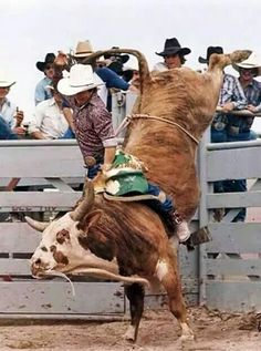 This is Don Gay, 8 time World Champion PRCA bull rider.                                                                                                                                                                                 More