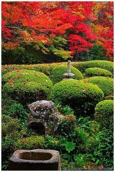 Red and green with a touch of stone #gardening #garden
