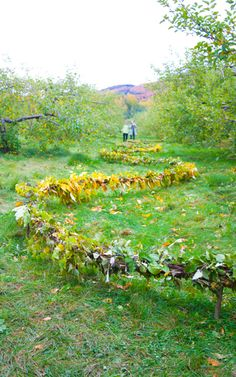 Créations-sur-le-champ land art Mont-Saint-Hilaire / Édition 2011