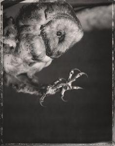 SKY/LIFE by David Ellingsen, via Behance #nature #owl