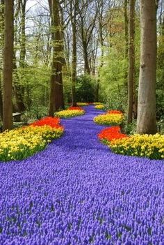 Keukenhof Gardens - also known as the Garden of Europe, is the world's largest flower garden situated near Lisse, Amsterdam, Netherlands. The yearly Tulip Festival is one of the most beautiful collections of flowers in the world.  A true welcome to spring. A carillion plays while you are strolling though.