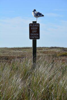 West Dennis Beach, Cape Cod