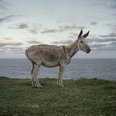 Daniel Naude, Donkey / Mlungwana / Eastern Cape