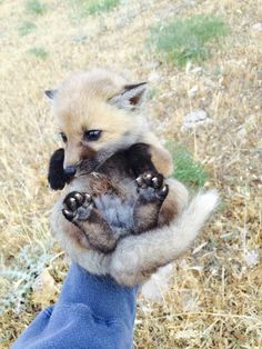 Let me just scoop this little guy off the ground. Baby Fox- http://ift.tt/25wwa81