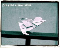 Un petit oiseau blanc - Barth Dunkan.