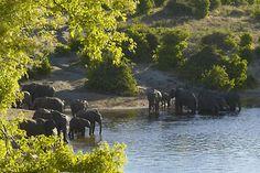 Luiana National Park, Angola.