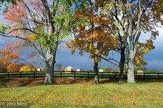 Tour an Historic Equestrian Estate in Virginia 13