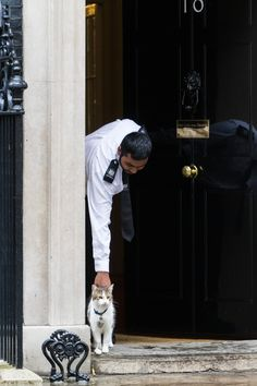 Downing Street cats | Hollywood.com