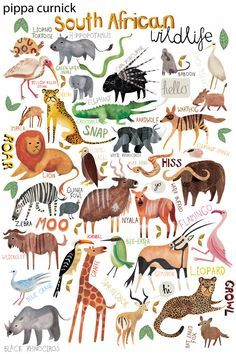 Illustration Friday :: Children's Book Illustrator - Pippa Curnick - My list of beautiful animals Image Deco, African Animals, Children's Book Illustration, Watercolour Illustration, Animal Illustrations, Childrens Books, Illustrators, Drawing People, Painting