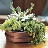 2. Plant a Table Centerpiece