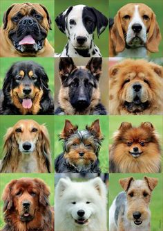 Dogs Collage - Jigsaw Puzzle by Educa Top 10 Dog Breeds, Dog Breeds That Dont Shed, Dog Breeds List, Large Dog Breeds, Japanese Dog Breeds, Japanese Dogs, Lego Technic, I Love Dogs, Baby Animals