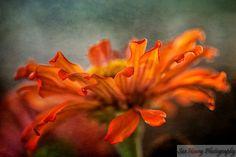 Sue Henry Photography - Blog - The GlamourShot