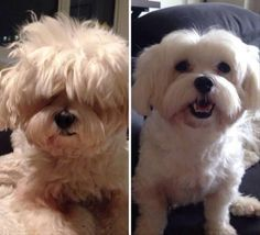 Dogs Before And After Haircuts Are The Cutest Things You'll See All Day - 25 Pics