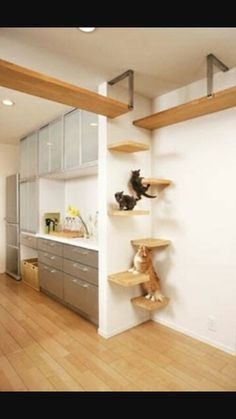 stagger small shelves back and forth across a corner for a cat ladder. much che… stagger small shelves back and forth across a corner for a cat ladder. much cheaper and not as tacky. Install next to stove! Cat Perch, Japanese Cat, Japanese Animals, Unique Cats, Unusual Pets, Exotic Pets, Cat Room, Cat Decor, Crazy Cats