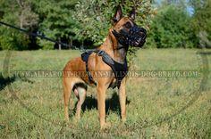 Everyday Belgian Malinois Net-Like Leather  Dog Muzzle (www.all-about-belgian-malinois-dog-breed.com)