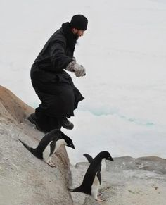 Orthodox monk with penguins. I NEVER tire of monk+animal pictures, ever.