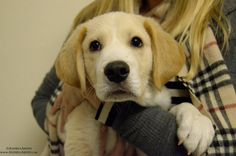 Badger the Hound Mix. Puppy Play Group in New York City at Andrea Arden Dog Training. #puppy #puppies #puppyplay #puppyplaygroups #puppytraining #puppysocialization #socialization