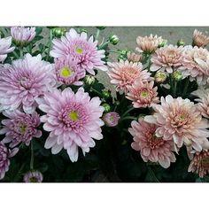 nargiz_natalia/2016/11/26 09:20:35/a flower dies after it growed. we grow up. #the1975#arcticmonkeys#lanadelrey#nirvana#kurtcobain#alexturner#grunge#softgrunge#theneighbourhood#mattyhealy#lizzygrant#jesserutherford#mayjailer#sunglasses#troyesivan#palms#paradise#sky#ldr#borntodie#honeymoon#flowers#littleobsession