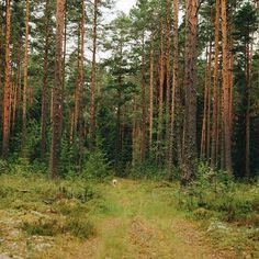 We explored some new roads today and found this wonderful wild place! We even heard a wolf here... И волчий вой был нам музыкой в этих новых диких местах, которые удалось обнаружить сегодня. . #vscocam #vsco #landscape #forest #wood #summer #July #fairytale #liveadventure #liveautentic #livefolk #folk #adventure #travel #nature #livegreen #road #wild