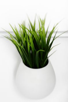 Green plant in white jar