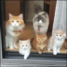 Have A Look At My Cat Family....... Look So Cute