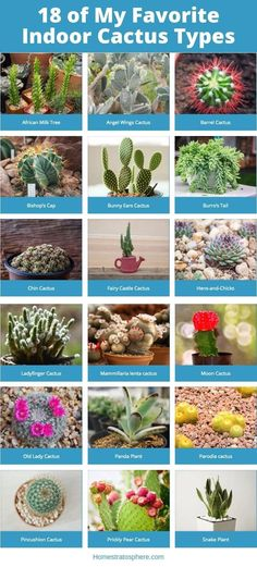 18 of my favorite indoor cactus options | 1004 Indoor Cactus Garden, Plants, Types Of Cactus Plants, Indoor Cactus, All About Plants, Cacti And Succulents, Indoor Cactus Plants, Cactus Types, Indoor Plants