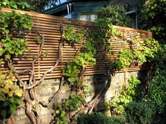 great backyard privacy fence design ideas to get inspired 11 Slatted Fence Panels, Wood Privacy Fence, Privacy Fence Designs, Garden Privacy, Backyard Privacy, Cedar Fence, Garden Trellis, Pergola Patio, Lattice Fence