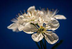 Blütenpracht: Die Obstbäume blühen. Mehr Bilder des Tages auf: http://www.nachrichten.at/nachrichten/bilder_des_tages/ (Bild: epa)