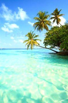Vacation Places, Vacation Destinations, Vacation Trips, Dream Vacations, Vacation Spots, Places To Travel, Places To See, Vacation Travel, Tropical Beaches