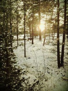 Winter Hike #peaceful #getlost #CndGetaway