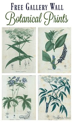 Great resource for a collection of botanical art that would be perfect for gallery walls. Vintage Botanical Prints, Botanical Art, Botanical Illustration, Vintage Art Prints, Free Printable Art, Free Printables, Free Art Prints, Cactus Y Suculentas, Diy Décoration