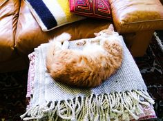 {soft belly kitty} by d a b i t o, via Flickr - I want to be that content! purr.