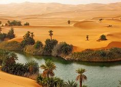 Sahara Desert Oasis | ... and all that. Classics of the golden sands oasis of the Sahara desert