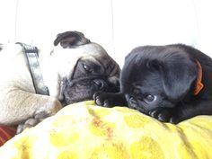 Maxi y Ozzy compartiendo la cama