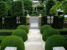 Clipped Box pathway for small gardens