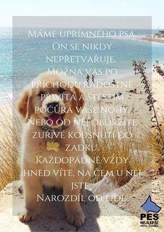 Belgian Malinois, Carpe Diem, Motto, Texts, Best Friends, Motivation, Dogs, Quotes, Animals