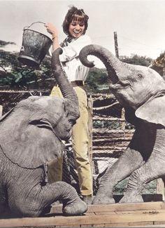 """Was wurde eigentlich aus der Farm in Afrika, auf der Anfang der 1960er """"Hatari"""" mit John Wayne, Elsa Martinelli und Hardy Krüger gedreht wurde? Hardy Krüger hat sie gekauft! Wie es danach weiterging: http://www.travelbook.de/welt/Tansania-Wo-Hardy-Krueger-einst-seinen-Traum-von-Afrika-lebte-212693.html"""