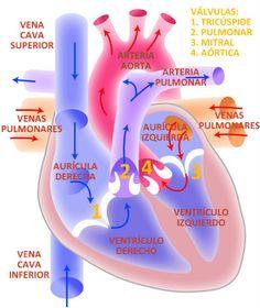 TU SALUD Y BIENESTAR : Insuficiencia Cardiaca