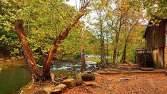 Fall colors beginning to show up at Tannehill State Park... photo from Mandi Mowery