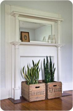 Sansevieria (snake plant) in crates Inside Garden, Inside Plants, Home And Garden, Balcony Plants, Outdoor Plants, Crate Decor, Snake Plant, Indoor Gardening, Inspired Homes