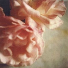 """Inspiration notes: Cy Twombly, """"Roses"""" See photo on Instagram @APIECE APART"""
