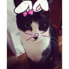 本日の癒し…♡ #japan#family#cat#happy#lucky#beatiful#wonderful#smile#fun#life#love#time#good#day#pic#my#girl#autumn#october#insta#instagram#instagood#愛猫#毎日くしゃくしゃする#可愛すぎる#フィガロ#snowがはまる