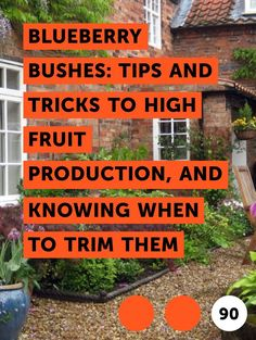 Learn Blueberry Bushes: Tips and Tricks to High Fruit Production, and Knowing When to Trim Them Pruning Blueberry Bushes, Fruit Bushes, Fruit Trees, Home Vegetable Garden, Fruit Garden, Edible Garden, Blueberry Tree, Blueberry Farm, Backyard Farming