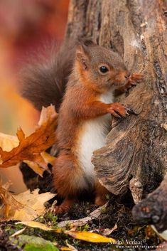 There are lots of squirrel like mammals like the ground hog, gopher as well as prairie dog. When it comes to foods, what do squirrel love to eat? Nature Animals, Animals And Pets, Baby Animals, Funny Animals, Cute Animals, Autumn Animals, Wild Animals, Woodland Creatures, Woodland Animals