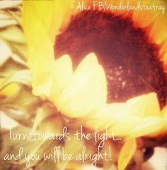 Light quote via Alice in Wonderland's TeaTray at www.Facebook.com/WonderlandsTeaTray