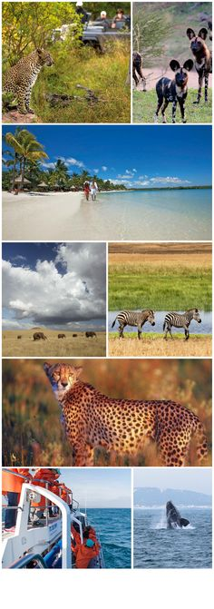 Where to go in Africa in SEPTEMBER - from safaris in Namibia and Botswana to beautiful tropical islands, and South Africa's Cape where you can see Southern Right Whales. #africa #travel #go2africa