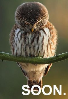 Funny animals with 21 pics like owl bowing. Pictures of funny animals with captions and in high definition. Beautiful Owl, Animals Beautiful, Pretty Birds, Love Birds, Cute Baby Animals, Funny Animals, Animal Memes, Wild Animals, Owl Pictures